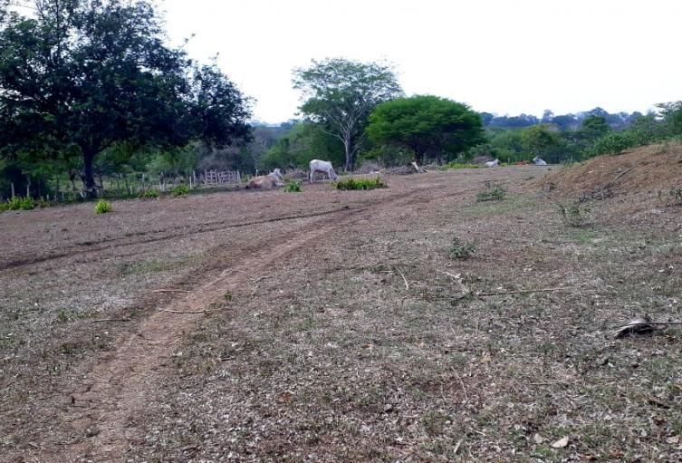 La sequía afecta la zona rural
