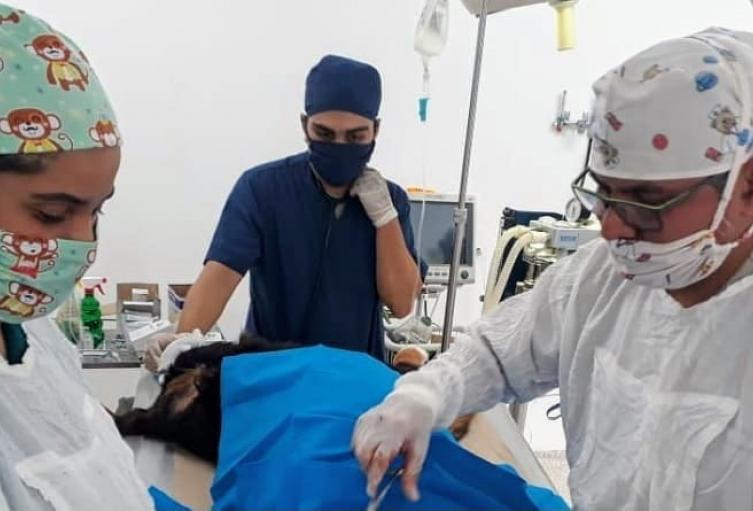 La investigación la da un respiro a la dueños de caninos