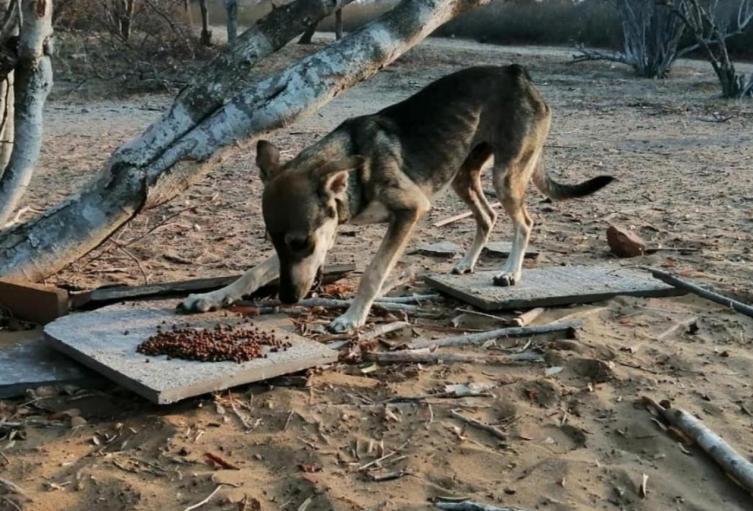 Disponen presupuesto en Riohacha para la protección de los animales