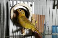 Estos fueron los animales silvestres recuperados por la Secretaria de Ambiente y por la Policía Ambiental.