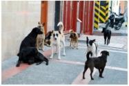 Los animales callejeros son los más afectados por la crisis del coronavirus.