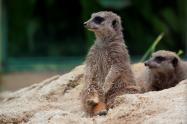 Especie del Zoológico de Barranquilla