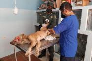 En mal estado y deshidratado fue encontrado un perro en zona industrial de Sincelejo