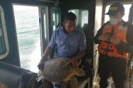 Rescatada tortuga verde en aguas del Golfo de Morrosquillo