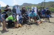 tres especies de Tortugas fueron  liberadas a su habitat natural