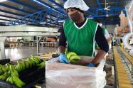 Los trabajadores aseguran que trabajan con amor por los beneficios que tienen al tener un empleo con todas las prestaciones