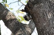 Decenas de especies han sido vistos en el Parque Tayrona en medio del aislamiento
