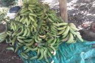 La caída del precio ha  afectado a los agricultores.