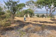 Autoridad ambiental denuncia quema de árboles en el Cerro de la Popa en Cartagena