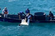 Las autoridades ambientales del Magdalena liberaron en su hábitat a tres tortugas medianas
