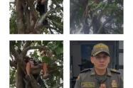 Policía en Sucre, sucre evitó  que una persona se quitara la vida ahorcándose en un árbol