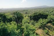 Bosque seco tropical en zona de compensación