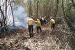 Bomberos de Sitionuevo en extinción de incendio forestal