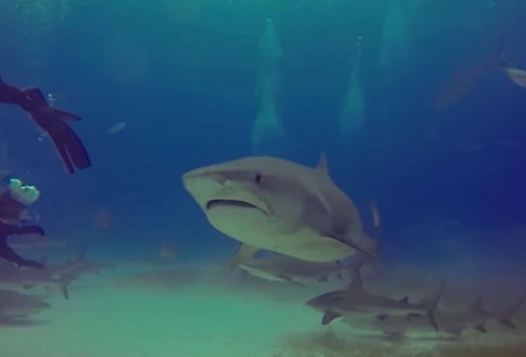 Tiburón estuvo al acechó de un aprendiz de buceo