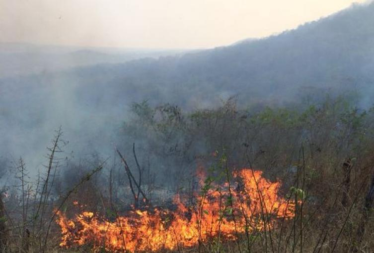 Los incendios han sido controlados por los bomberos.