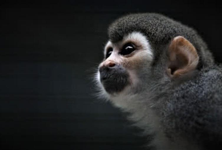 ¡Paremos ya!, la campaña que busca acabar con el tráfico de fauna silvestre