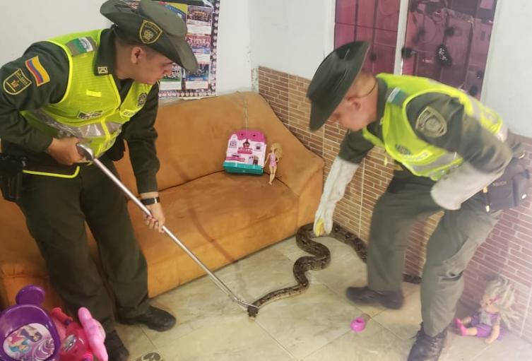 Una Boa fue encontrada en los juguetes de una niña.