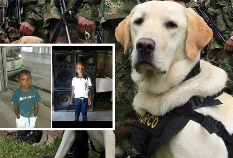 Con perros de búsqueda, autoridades buscan a niño desaparecido en Medellín