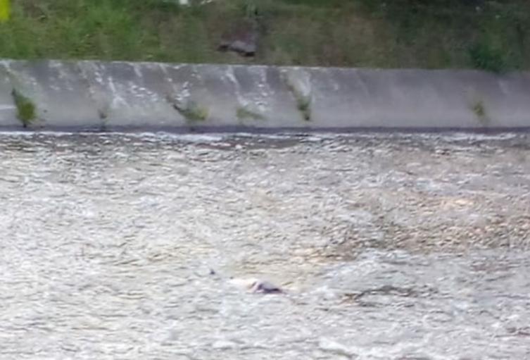Rescatan del río Medellín, el cadáver de una mujer