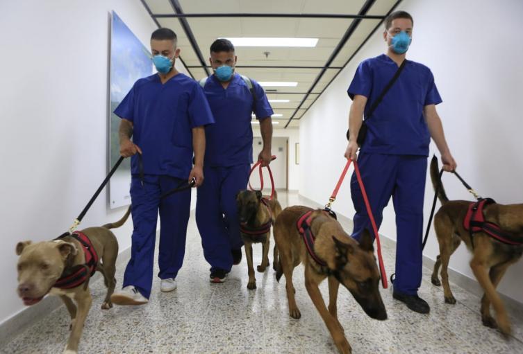 Cuatro perros hacen parte de esta investigación.