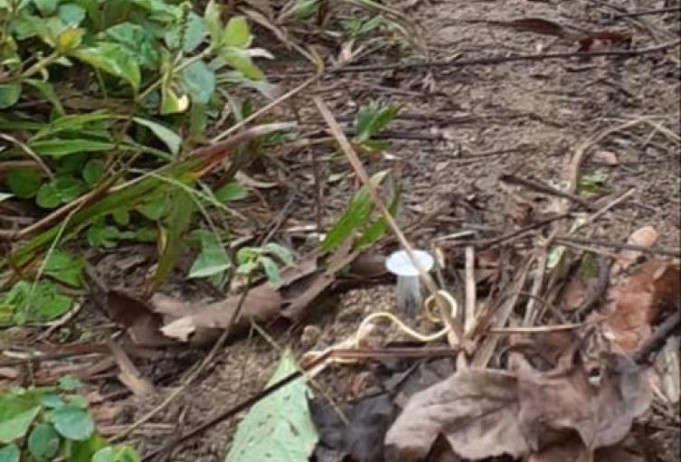 Minas antipersonal sembradas por los grupos armados en Murindó, Antioquia.