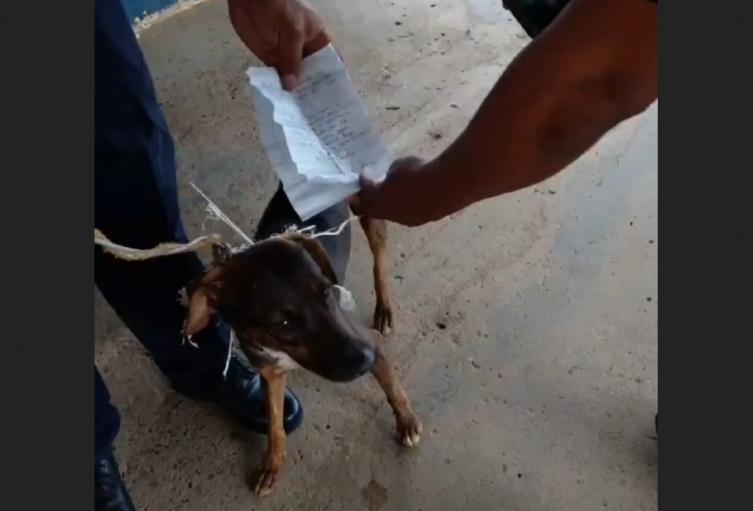 Sorprendieron a perro que ejercía de cartero clandestino entre presos de una cárcel