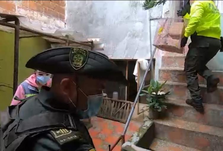 Rescatan de una vivienda en Medellín 46 aves que eran traficadas de manera ilegal