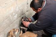 El comerciante turco Omer Yilmaz cuida al cachorro al que le salvó la vida tras darle un masaje cardiaco y practicarle respiración boca a boca después de que se ahogara con gran cantidad de comida, en Rize, Turquía, el 25 de marzo de 2019.