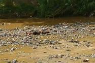 En los últimos día son cuatro los cuerpos hallados en ese afluente