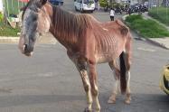 Habrá acciones legales contra el dueño del equino.