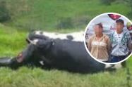 Por no pagar extorsiones, degollaron el ganado de su patrón, en Santa Rosa de Osos