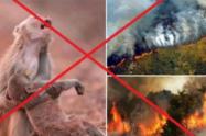 Fotos virales sobre incendios en la Amazonia que no son verdaderas
