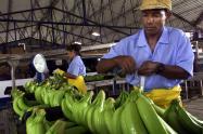 Plantación de banano en Colombia.