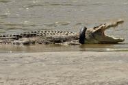 Recompensa a quien salve la vida de cocodrilo retirándole un neumático de su cuello