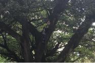 Joven protesta subido a un árbol en el ministerio de Ambiente