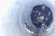 En un acto de amor, bomberos de Sabaneta rescatan a dos crías de gatos