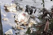 Hallan cadáver de un hombre metido en un costal en el río Medellín