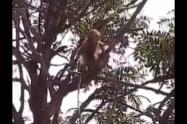 Monos India