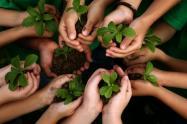 La meta, plantar 25 millones de árboles en el departamento
