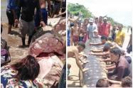Pescadores descuartizaron un tiburón ballena con sevicia