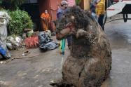 Rata gigante en México