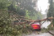 Árboles caídos y vías colapsadas dejan en estos momentos fuertes lluvias en Medellín