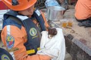 Animales rescatados en Dabeiba