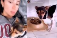 Denuncian a una mujer por electrocutar a su perro para que haga caso