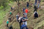 Sembraron 60 árboles en el cerro de las Tres Cruces de Medellín