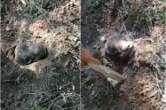 [Video] Rescataron al perro que fue enterrado vivo en Tolima