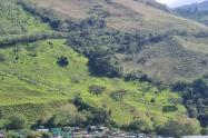 En un árbol de esta montaña fue colgado el animal en Dabeiba, Antioquia.