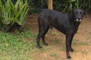El perro sufrió lesiones que pusieron en riesgo su vida.