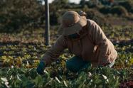 Compre los productos colombianos: Campesinos de Colombia