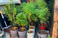 """Cayó el """"chikunguña"""" de Itagüí, el supuesto delincuente tenía un jardín de marihuana"""